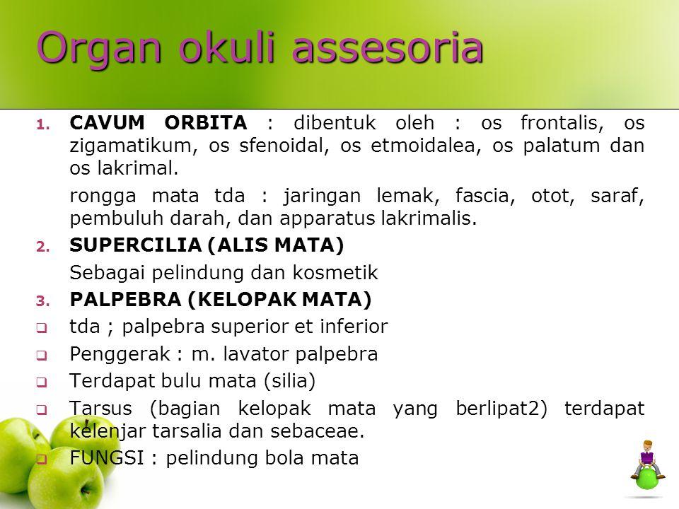 Organ okuli assesoria 1.