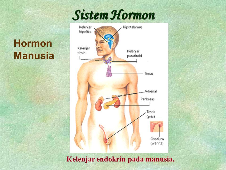 Sistem Hormon Hormon Manusia Kelenjar endokrin pada manusia.