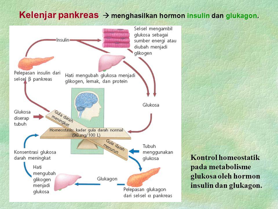 Kontrol homeostatik pada metabolisme glukosa oleh hormon insulin dan glukagon. Kelenjar pankreas  menghasilkan hormon insulin dan glukagon.