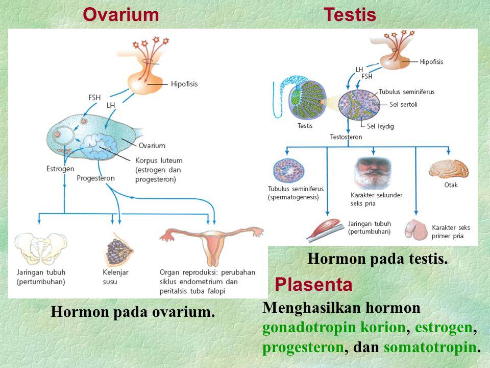 Ovarium Hormon pada ovarium. Testis Hormon pada testis. Plasenta Menghasilkan hormon gonadotropin korion, estrogen, progesteron, dan somatotropin.