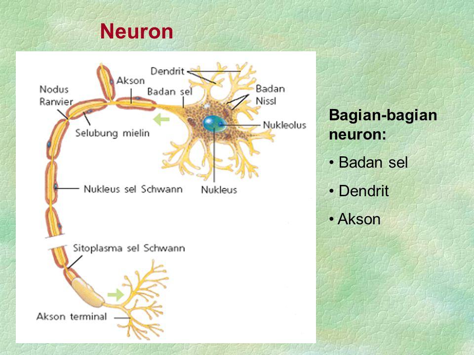 Sistem saraf tepi Berdasarkan arah impuls yang dibawanya Sistem saraf aferen Sistem saraf eferen Berdasarkan asalnya Sistem saraf kepala Sistem saraf tulang belakang Sistem saraf tepi yang terdiri dari sistem saraf kepala dan sistem saraf tulang belakang.