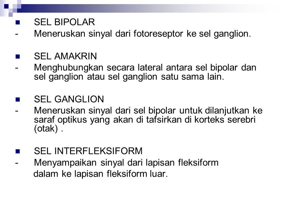 SEL BIPOLAR - Meneruskan sinyal dari fotoreseptor ke sel ganglion. SEL AMAKRIN - Menghubungkan secara lateral antara sel bipolar dan sel ganglion atau
