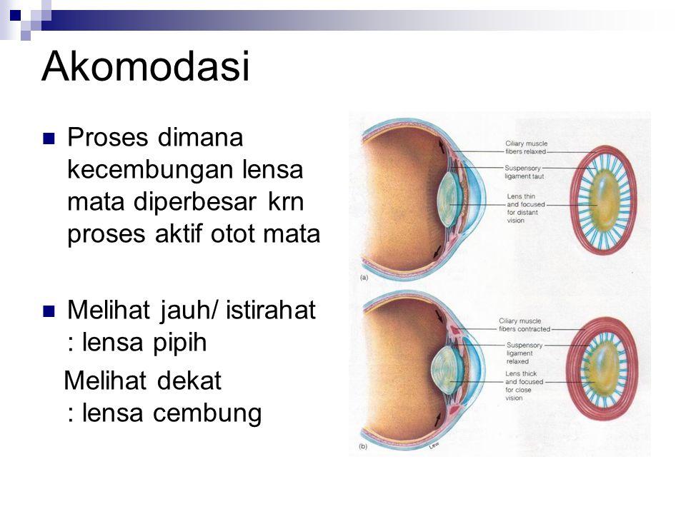 Akomodasi Proses dimana kecembungan lensa mata diperbesar krn proses aktif otot mata Melihat jauh/ istirahat : lensa pipih Melihat dekat : lensa cembung