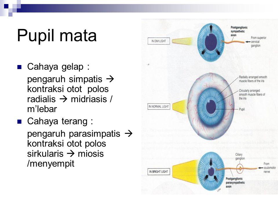 Pupil mata Cahaya gelap : pengaruh simpatis  kontraksi otot polos radialis  midriasis / m'lebar Cahaya terang : pengaruh parasimpatis  kontraksi ot