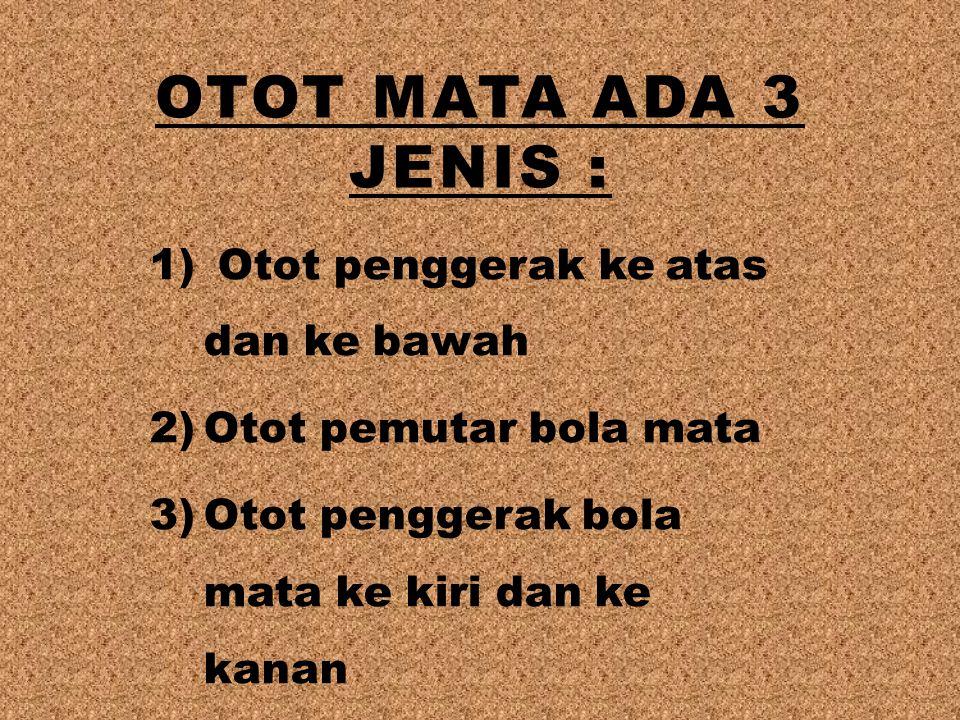 OTOT MATA ADA 3 JENIS : 1) Otot penggerak ke atas dan ke bawah 2)Otot pemutar bola mata 3)Otot penggerak bola mata ke kiri dan ke kanan