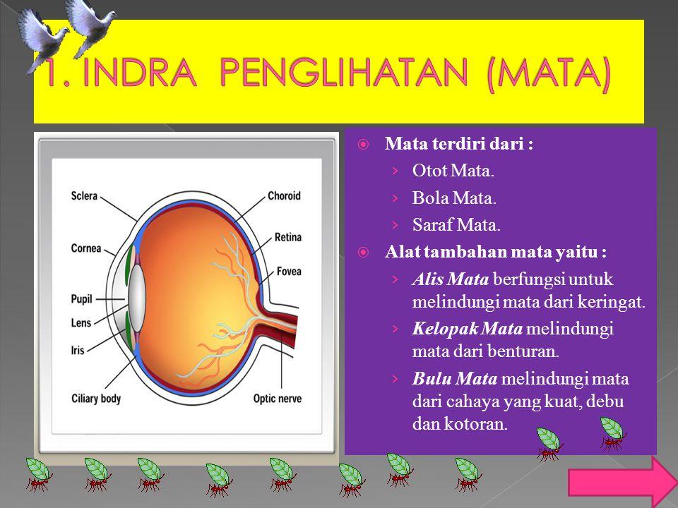  Mata terdiri dari : › Otot Mata. › Bola Mata. › Saraf Mata.  Alat tambahan mata yaitu : › Alis Mata berfungsi untuk melindungi mata dari keringat.