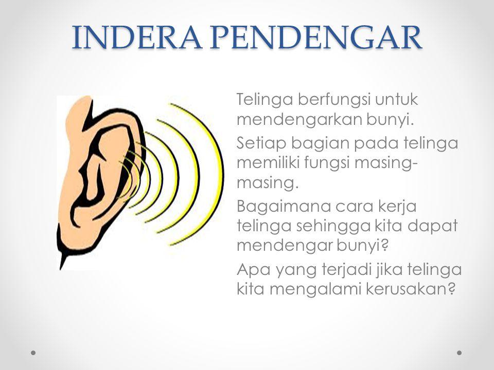 INDERA PENDENGAR Telinga berfungsi untuk mendengarkan bunyi. Setiap bagian pada telinga memiliki fungsi masing- masing. Bagaimana cara kerja telinga s
