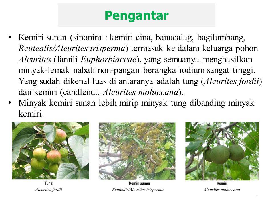 Pengantar 2 Kemiri sunan (sinonim : kemiri cina, banucalag, bagilumbang, Reutealis/Aleurites trisperma) termasuk ke dalam keluarga pohon Aleurites (fa