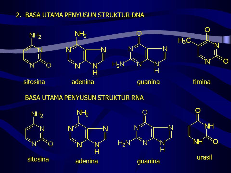 2. BASA UTAMA PENYUSUN STRUKTUR DNA sitosinatiminaadeninaguanina BASA UTAMA PENYUSUN STRUKTUR RNA urasil guaninaadenina sitosina