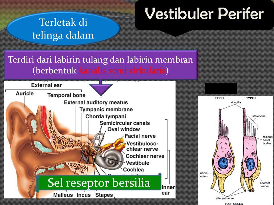Kanalis Semisirkularis (KSS) Terdiri dari: Horizontal (lateral) AnteriorPosterior