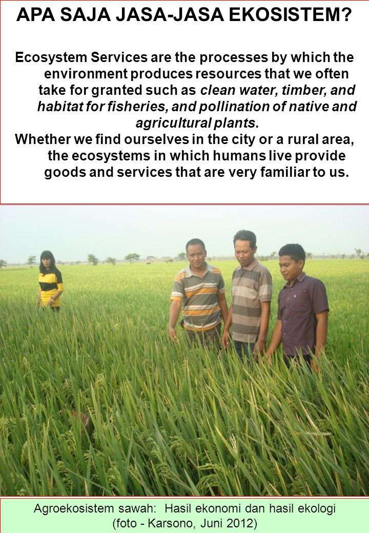 APA SAJA JASA-JASA EKOSISTEM? Ecosystem Services are the processes by which the environment produces resources that we often take for granted such as