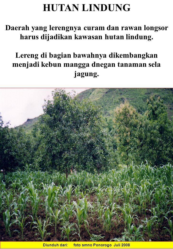 HUTAN LINDUNG Daerah yang lerengnya curam dan rawan longsor harus dijadikan kawasan hutan lindung.
