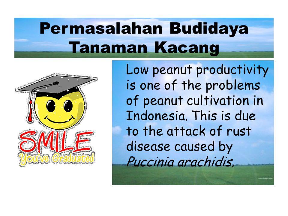 Kegunaan/Peran/Nilai Ekonomi Kacang Tanah biasa digunakan untuk membuat mentega, minyak goreng, keju, dan juga sabun. Hasil sampingan dari minyaknya d