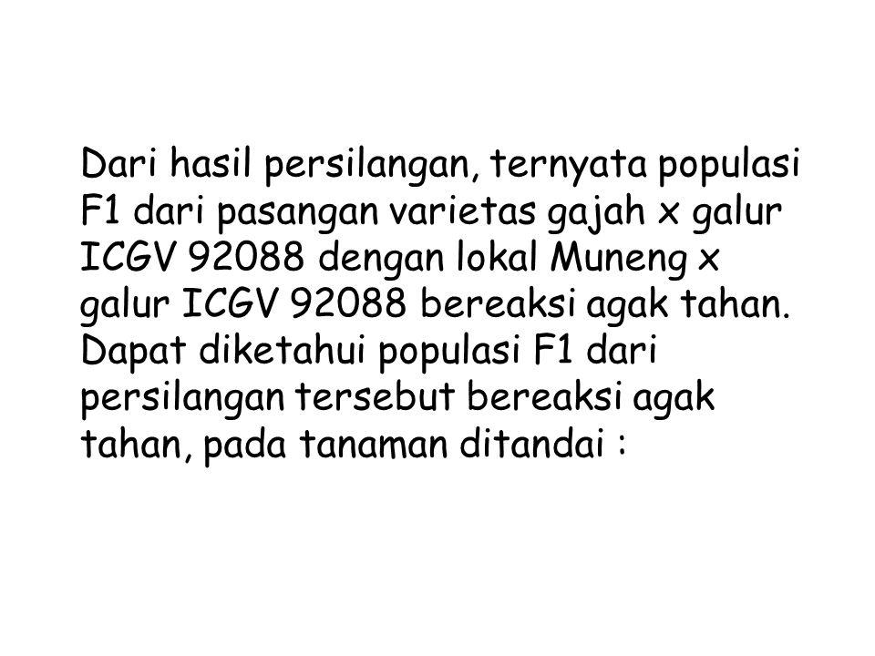 1.G7 = Populasi F1 dari Gajah x PI-4056132 2.G8 = Populasi F1 dari Gajah x ICGV 92088 3.G9 = Populasi F1 dari Gajah x ICGV 87358 4.G10 = Populasi F1 d