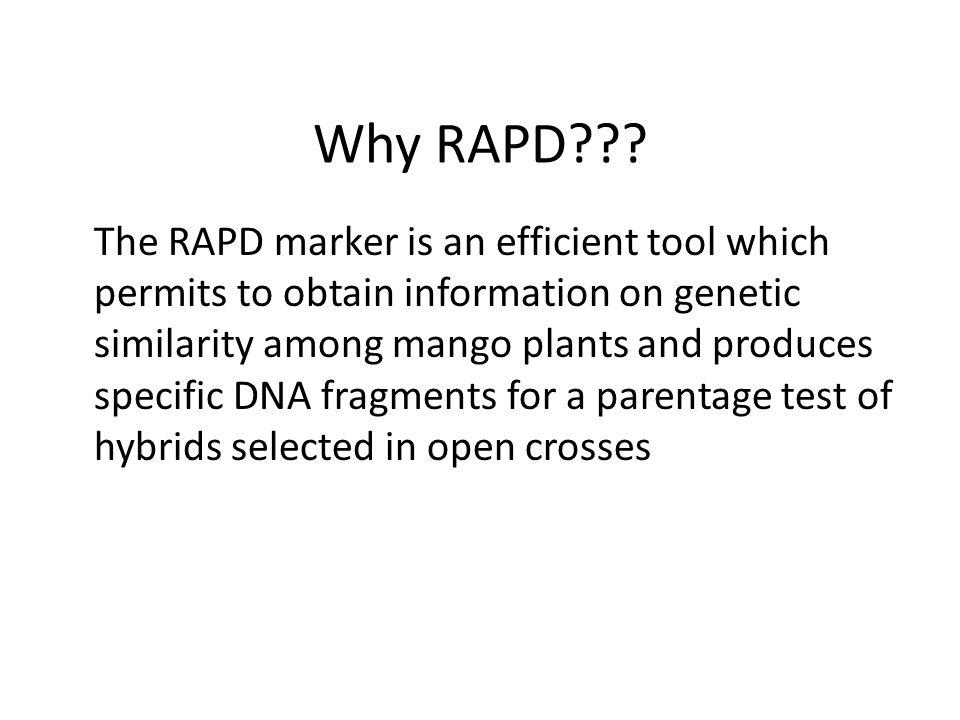MANGO BREEDING METHODS Propagation by Seed (generative) 1. Open Crosses Identifield by Random Amplified Polymorphic DNA (RAPD) Propagation through veg