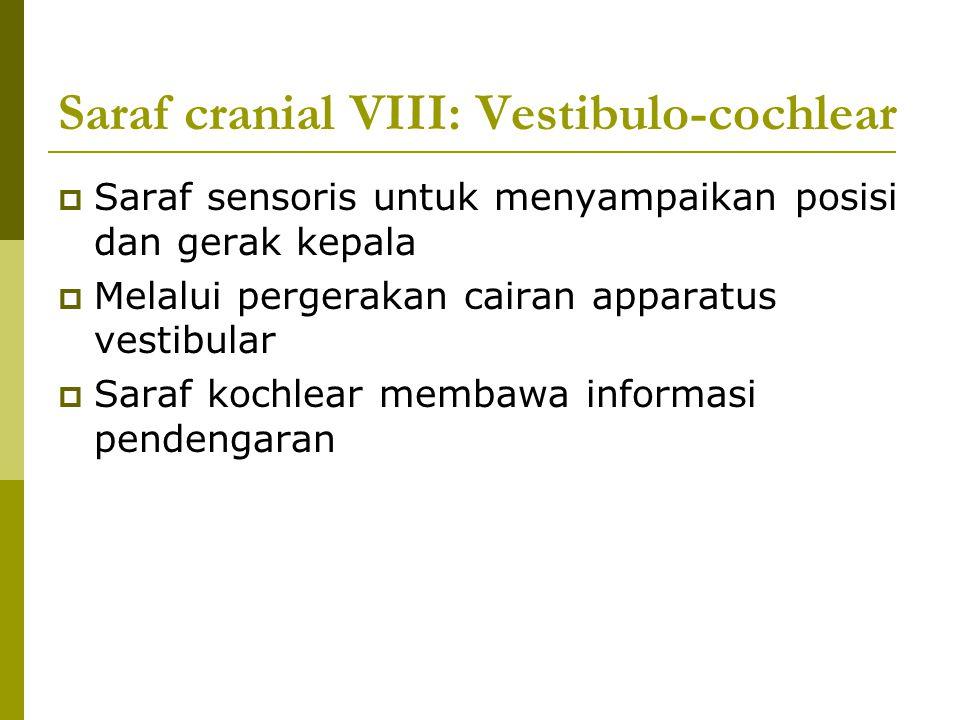 Saraf cranial VIII: Vestibulo-cochlear  Saraf sensoris untuk menyampaikan posisi dan gerak kepala  Melalui pergerakan cairan apparatus vestibular 