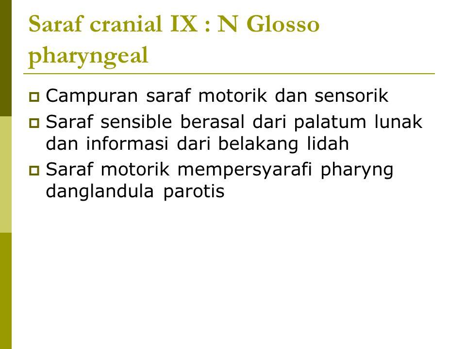 Saraf cranial IX : N Glosso pharyngeal  Campuran saraf motorik dan sensorik  Saraf sensible berasal dari palatum lunak dan informasi dari belakang l