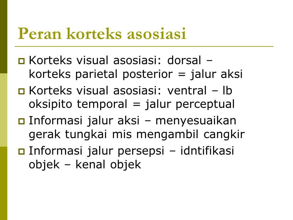Peran korteks asosiasi  Korteks visual asosiasi: dorsal – korteks parietal posterior = jalur aksi  Korteks visual asosiasi: ventral – lb oksipito te