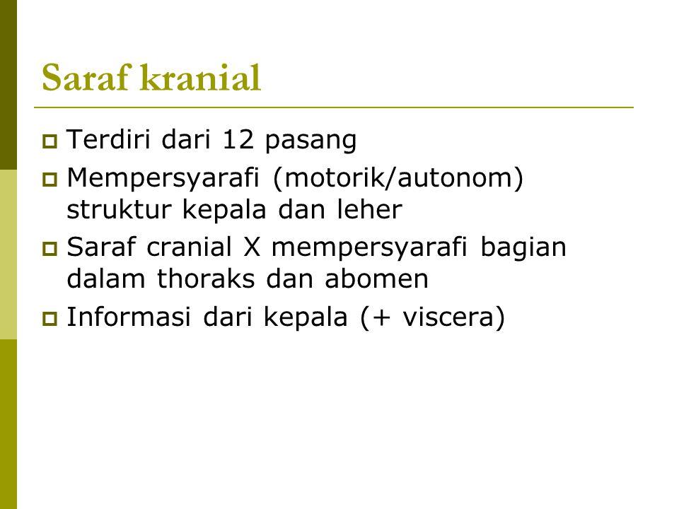 Saraf kranial  Terdiri dari 12 pasang  Mempersyarafi (motorik/autonom) struktur kepala dan leher  Saraf cranial X mempersyarafi bagian dalam thorak