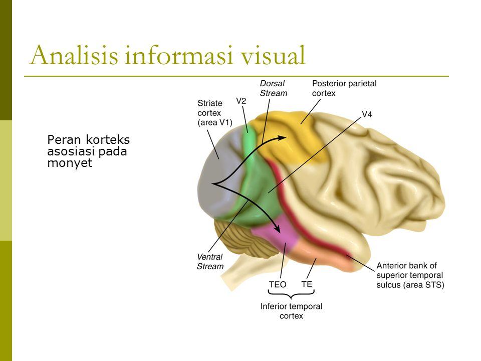 Analisis informasi visual Peran korteks asosiasi pada monyet