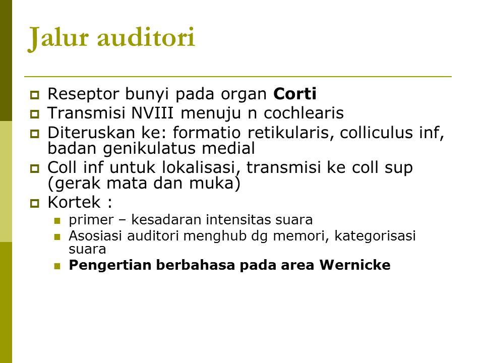 Jalur auditori  Reseptor bunyi pada organ Corti  Transmisi NVIII menuju n cochlearis  Diteruskan ke: formatio retikularis, colliculus inf, badan ge