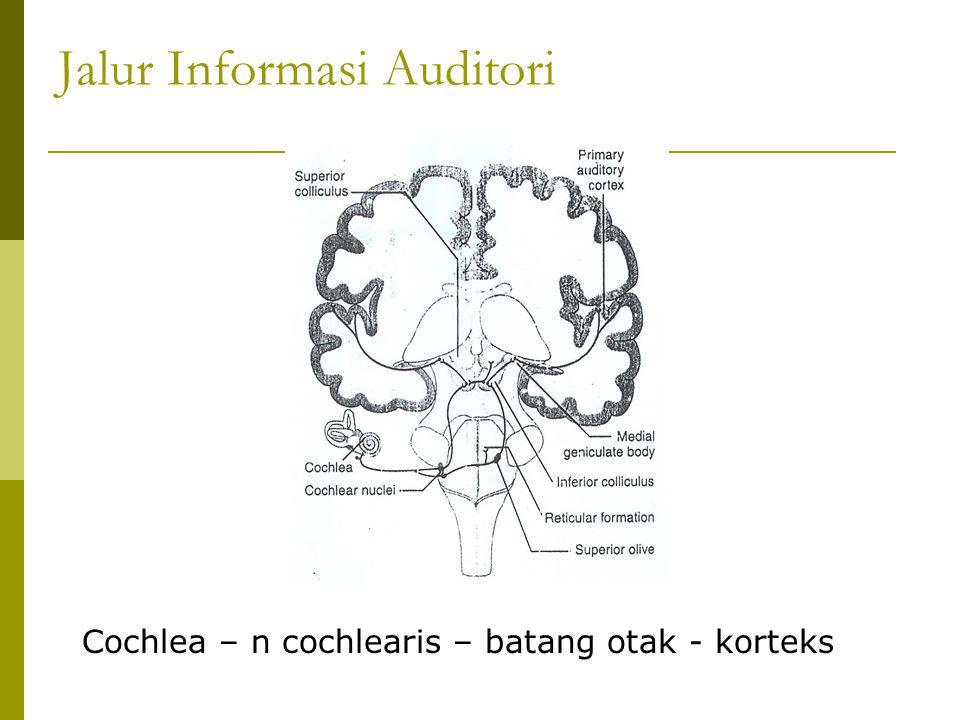 Jalur Informasi Auditori Cochlea – n cochlearis – batang otak - korteks