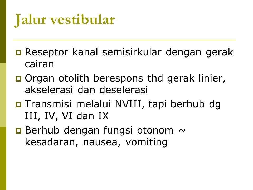 Jalur vestibular  Reseptor kanal semisirkular dengan gerak cairan  Organ otolith berespons thd gerak linier, akselerasi dan deselerasi  Transmisi m