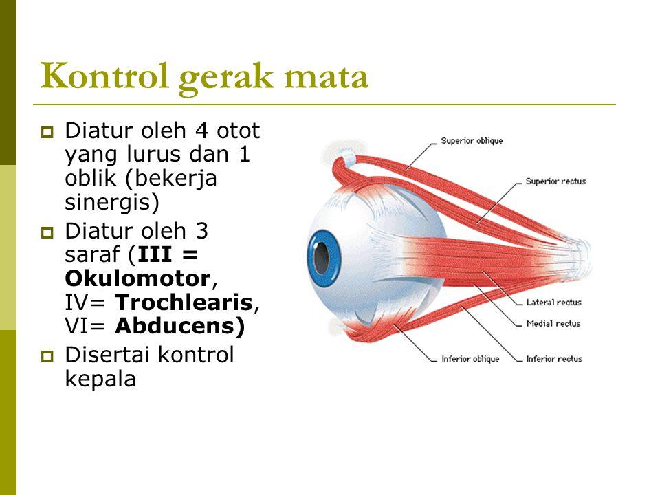 Kontrol gerak mata  Diatur oleh 4 otot yang lurus dan 1 oblik (bekerja sinergis)  Diatur oleh 3 saraf (III = Okulomotor, IV= Trochlearis, VI= Abduce