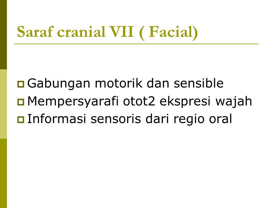 Saraf cranial VII ( Facial)  Gabungan motorik dan sensible  Mempersyarafi otot2 ekspresi wajah  Informasi sensoris dari regio oral