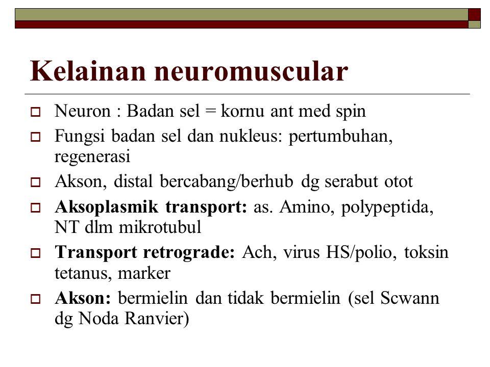 Kelainan neuromuscular  Neuron : Badan sel = kornu ant med spin  Fungsi badan sel dan nukleus: pertumbuhan, regenerasi  Akson, distal bercabang/ber