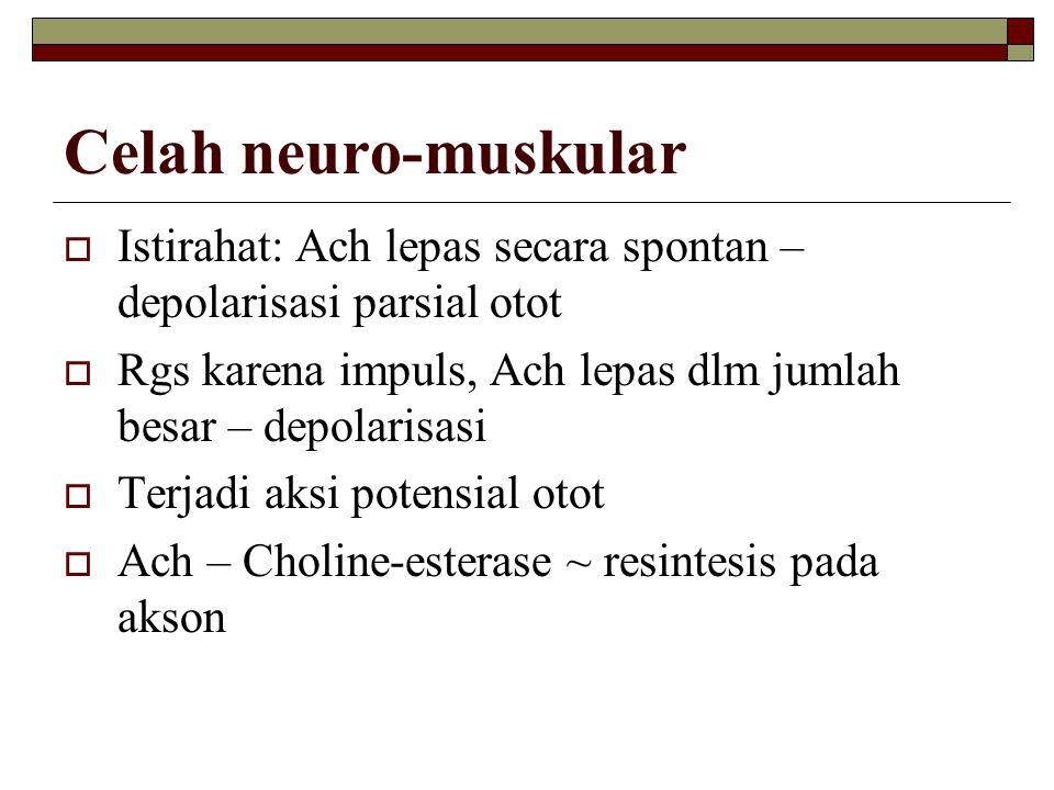 Celah neuro-muskular  Istirahat: Ach lepas secara spontan – depolarisasi parsial otot  Rgs karena impuls, Ach lepas dlm jumlah besar – depolarisasi