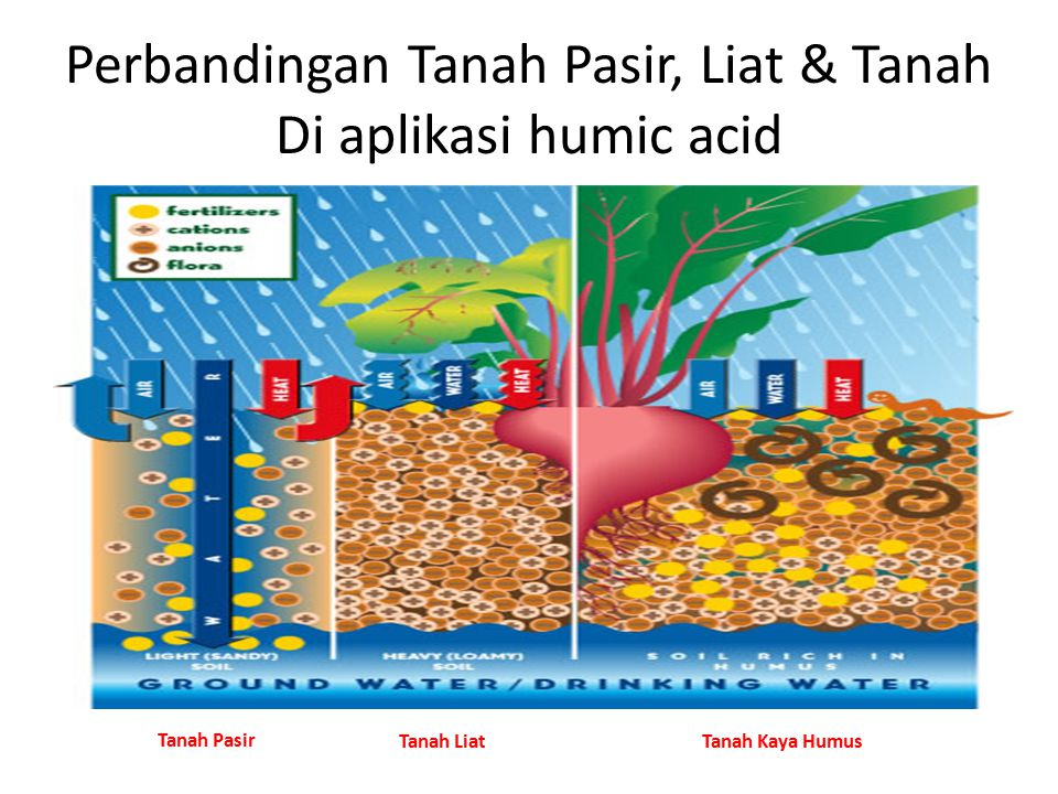 Perbandingan Tanah Pasir, Liat & Tanah Di aplikasi humic acid Tanah Pasir Tanah LiatTanah Kaya Humus