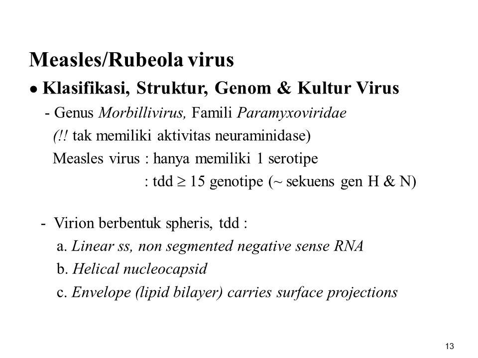 13 Measles/Rubeola virus ● Klasifikasi, Struktur, Genom & Kultur Virus - Genus Morbillivirus, Famili Paramyxoviridae (!! tak memiliki aktivitas neuram