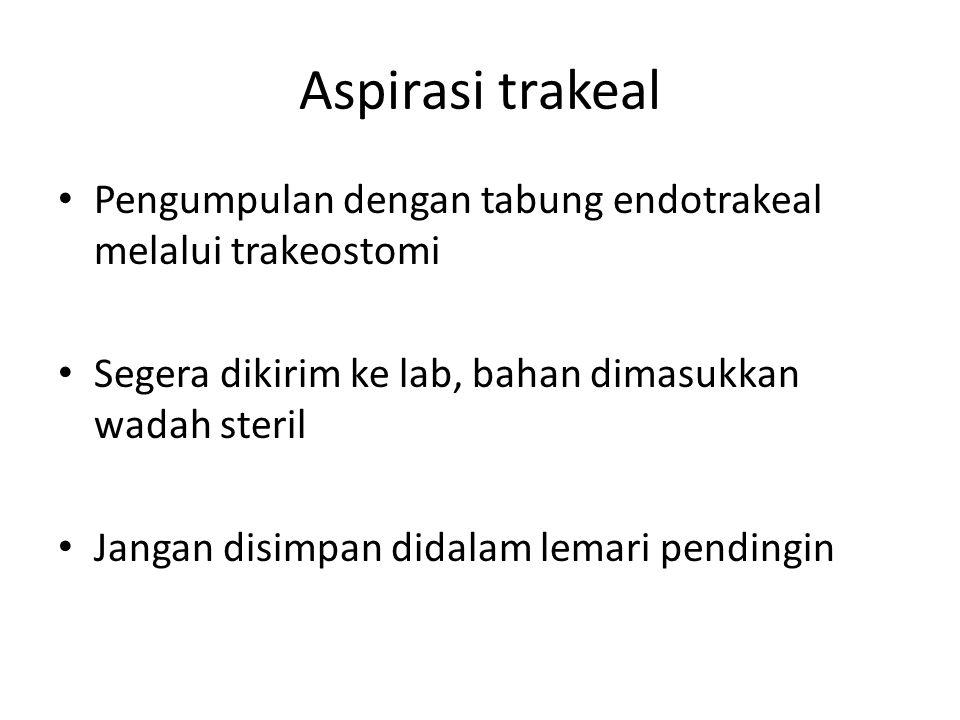 Aspirasi trakeal Pengumpulan dengan tabung endotrakeal melalui trakeostomi Segera dikirim ke lab, bahan dimasukkan wadah steril Jangan disimpan didalam lemari pendingin