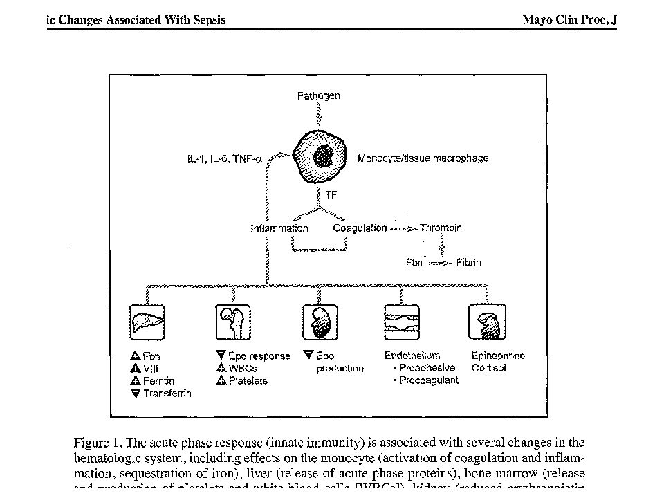 Hemoglobin-Anemia blood loss decreased production (hypoproliferative ane- mia) – a reticuloendothelial block in iron transport – decreased sensitivity of the erythron to erythropoietin – shortened red blood cell survival.