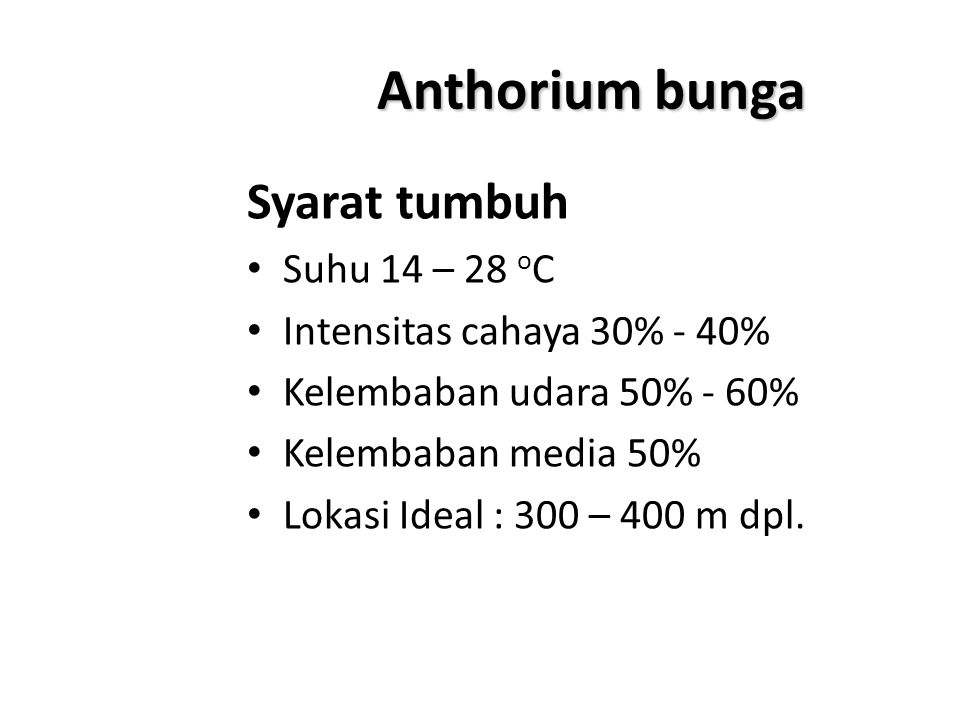 Anthorium bunga Syarat tumbuh Suhu 14 – 28 o C Intensitas cahaya 30% - 40% Kelembaban udara 50% - 60% Kelembaban media 50% Lokasi Ideal : 300 – 400 m
