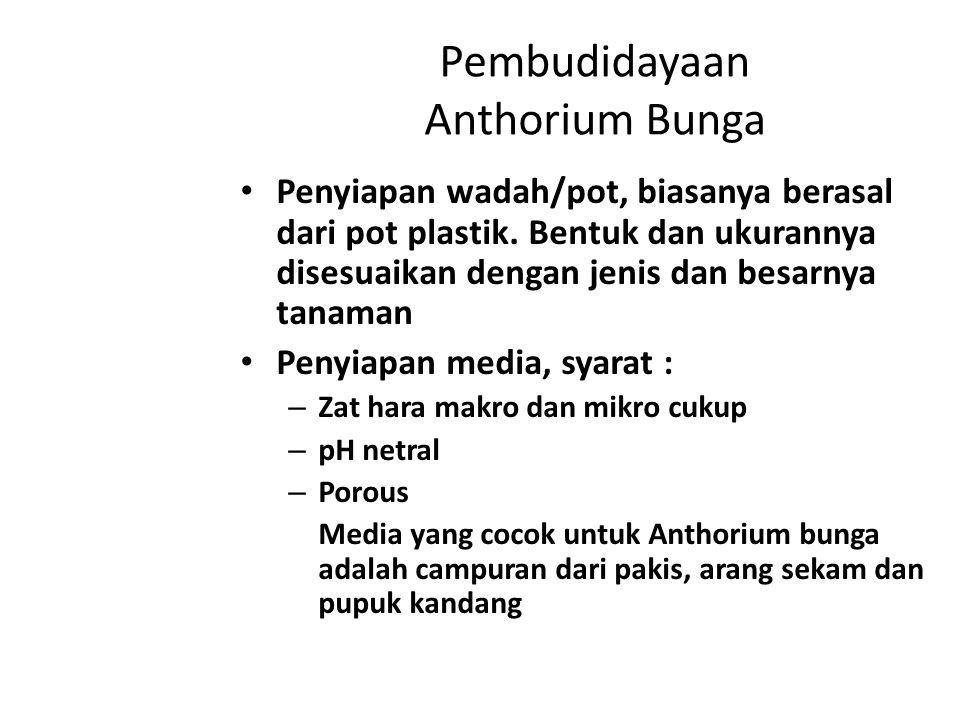 Pembudidayaan Anthorium Bunga Penyiapan wadah/pot, biasanya berasal dari pot plastik. Bentuk dan ukurannya disesuaikan dengan jenis dan besarnya tanam