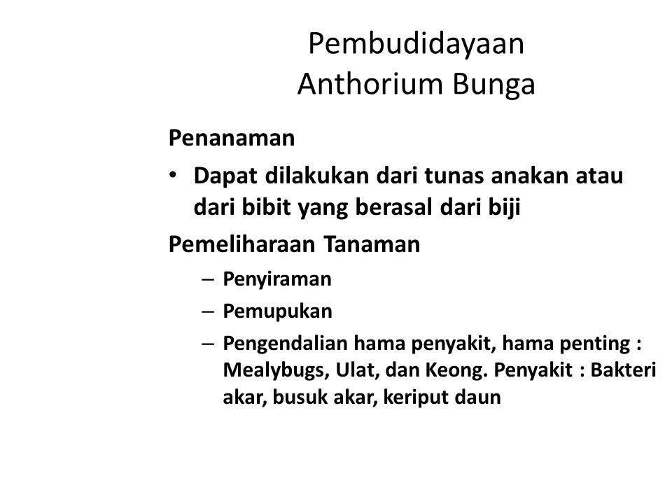 Anthorium daun Syarat tumbuh Suhu 14 – 28 o C Intensitas cahaya 30% - 40% Kelembaban udara 50% - 60% Kelembaban media 50% Lokasi Ideal : 200 – 400 m dpl.