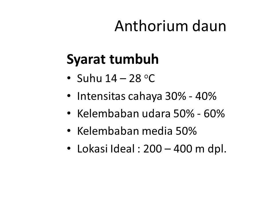 Anthorium Dibedakan menjadi 2 : 1.