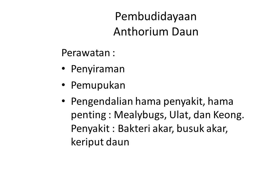 Pembudidayaan Anthorium Daun Perawatan : Penyiraman Pemupukan Pengendalian hama penyakit, hama penting : Mealybugs, Ulat, dan Keong. Penyakit : Bakter