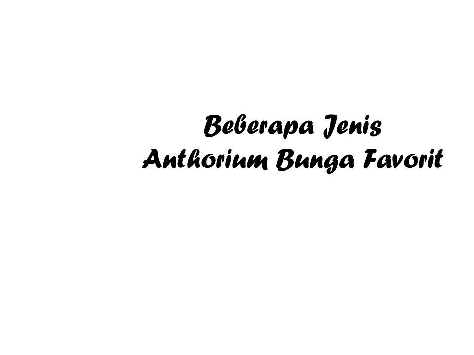 Beberapa Jenis Anthorium Bunga Favorit