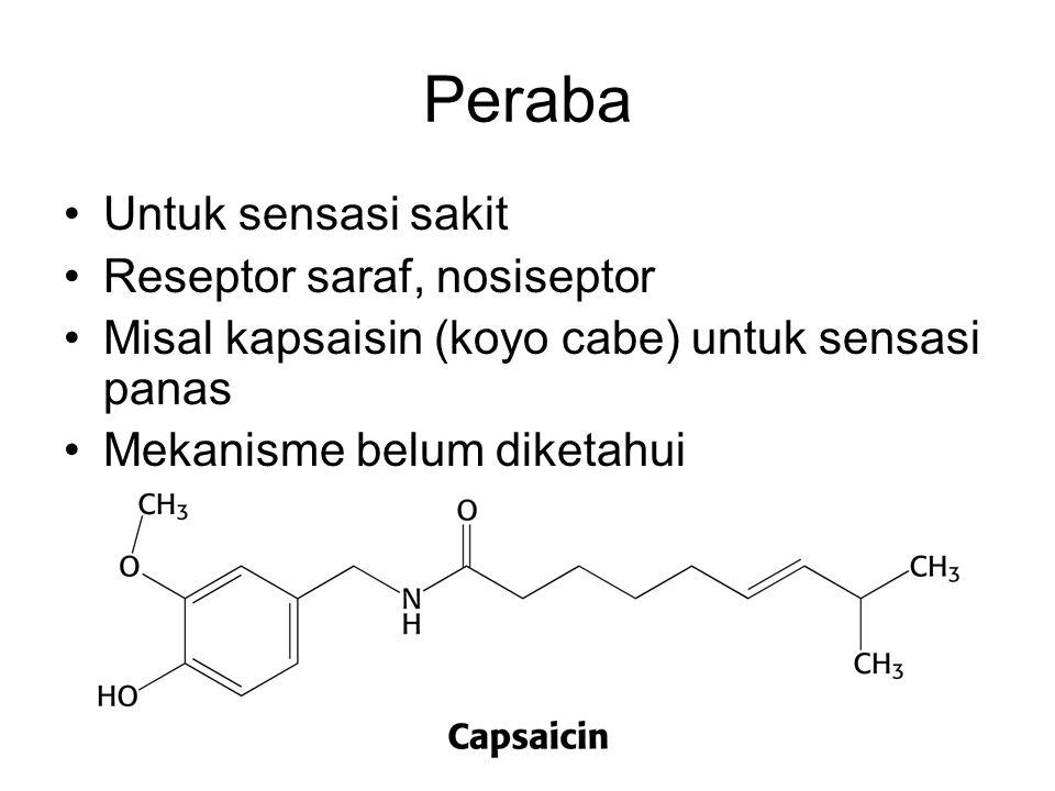 Peraba Untuk sensasi sakit Reseptor saraf, nosiseptor Misal kapsaisin (koyo cabe) untuk sensasi panas Mekanisme belum diketahui