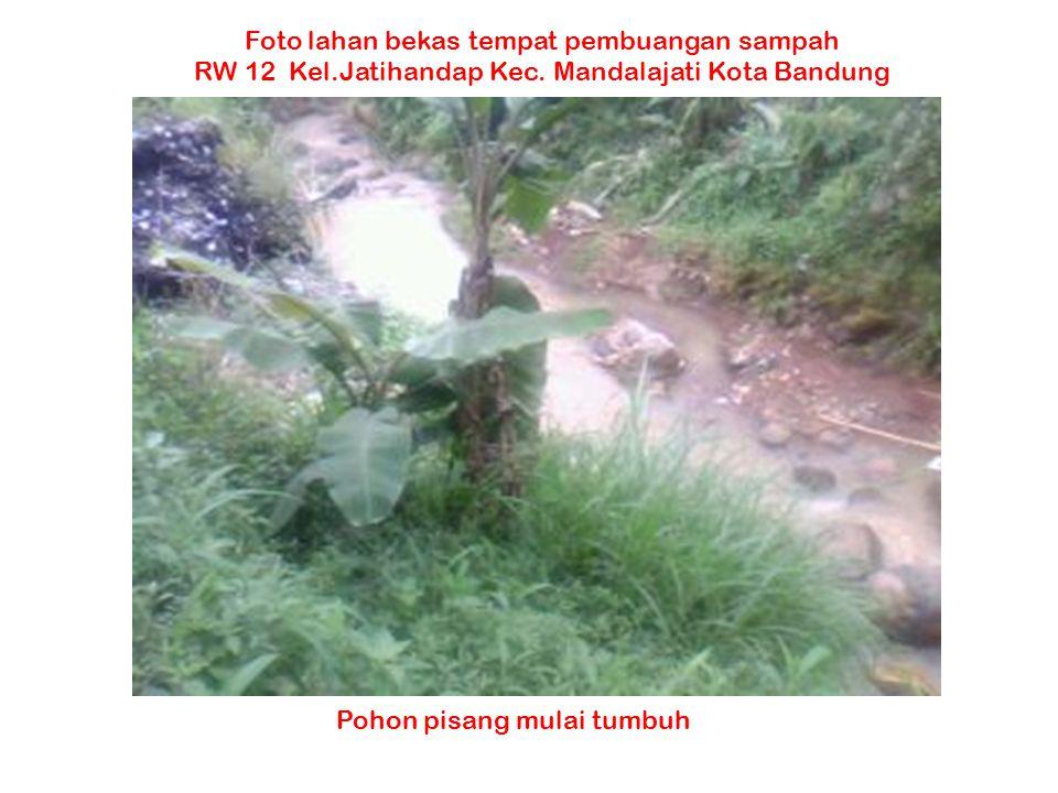 Pohon pisang mulai tumbuh Foto lahan bekas tempat pembuangan sampah RW 12 Kel.Jatihandap Kec. Mandalajati Kota Bandung