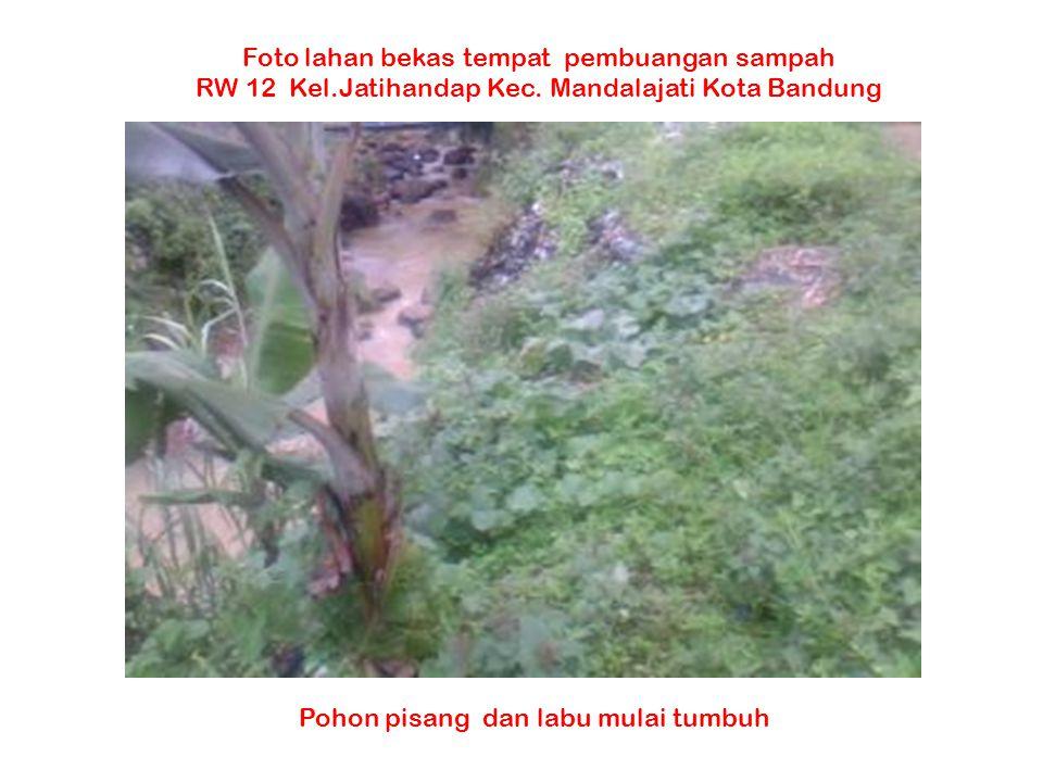 Pohon pisang dan labu mulai tumbuh Foto lahan bekas tempat pembuangan sampah RW 12 Kel.Jatihandap Kec. Mandalajati Kota Bandung