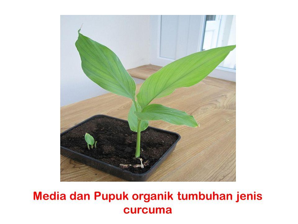 Media dan Pupuk organik tumbuhan jenis curcuma