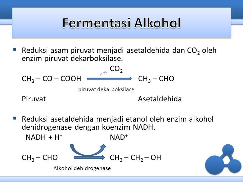  Reduksi asam piruvat menjadi asetaldehida dan CO 2 oleh enzim piruvat dekarboksilase. CO 2 CH 3 – CO – COOH CH 3 – CHO piruvat dekarboksilase Piruva