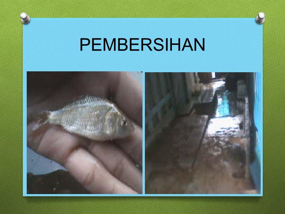 PEMBERSIHAN