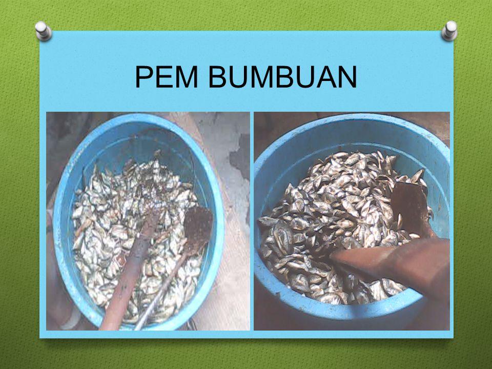 PEM BUMBUAN