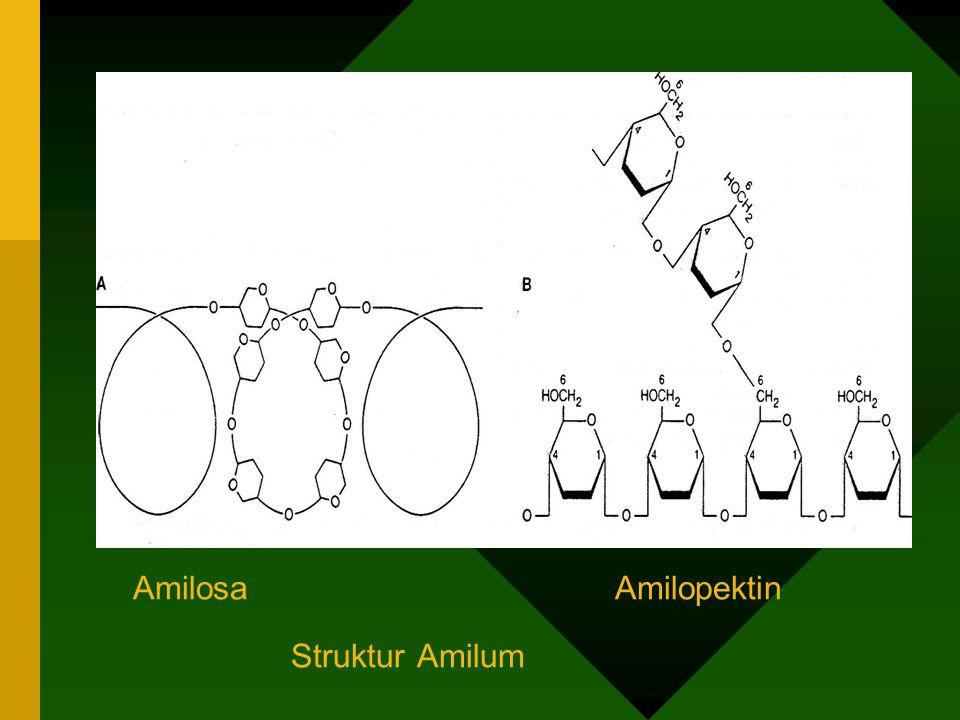 Tepung ( Amilum ) * rantai lurus : ikatan (1-4)α glikosidik * sedikit rantai cabang : ikatan (1-6)α gliko sidik Glikogen : - strukturnya sama dgn amilum - rantai cabang lebih banyak Sellulosa : * tidak dapat dicerna (pd mamalia, manusia) * tidak bercabang * ikatan (1-4) β glikosidik