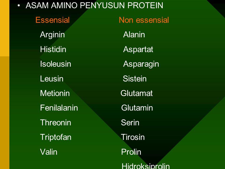 PROTEIN * tersusun dari asam amino asam amino dasar untuk menyusun protein : 20 * dari 20 asam amino dasar, separuhnya tidak dapat disintesis di dalam tubuh hewan & manusia shg.